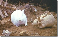 Killer_rabbit