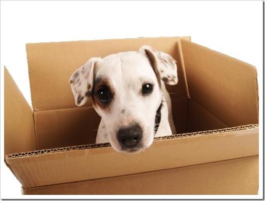 puppy-box