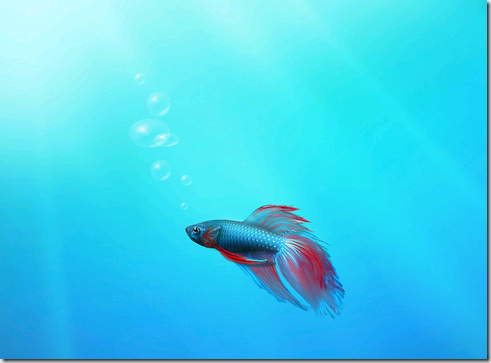 windows 7 and the betta fish ; ) laurent duveaupost navigation ← windows 7 beta
